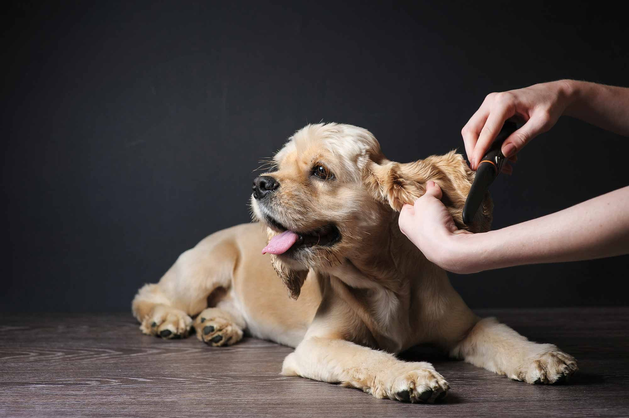 benefits of regular pet grooming