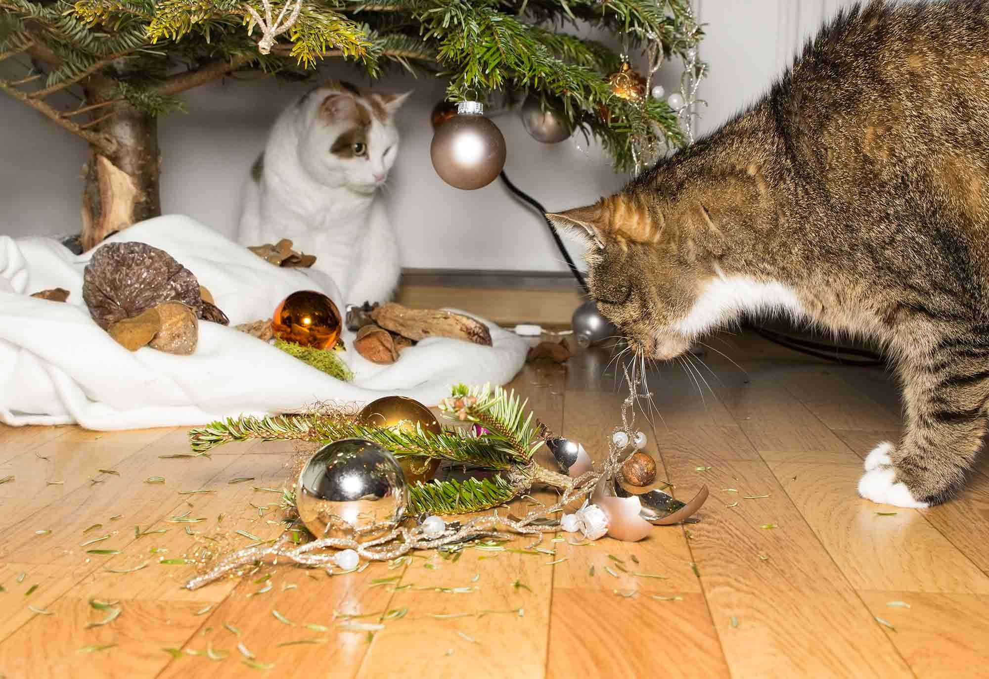 the 6 worst holiday decorations for pets - Are Christmas Trees Poisonous To Cats