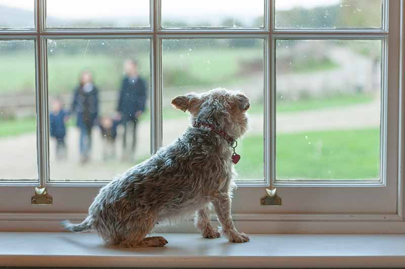 Pet anxiety can cause bad behavior in bored pets