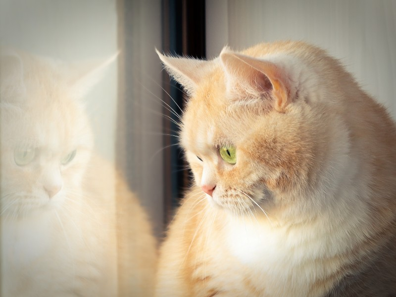 There is a Dangerous Link Between Pet Obesity and Diabetes