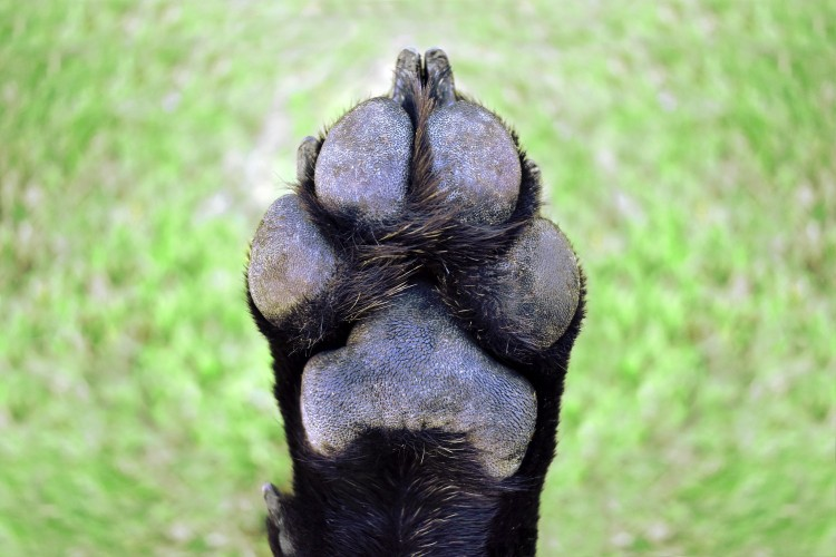stuff for dogs paws