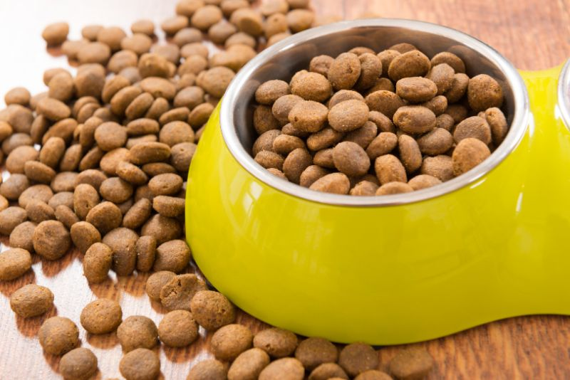 It's a Dog Food Recall, Now What?