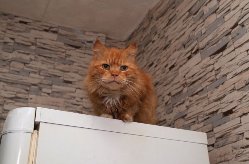 An orange cat looks down from the top of a cabinet.